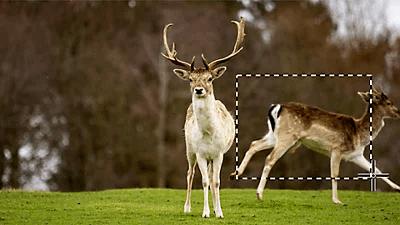 Adobe Photoshop objekte entfernen