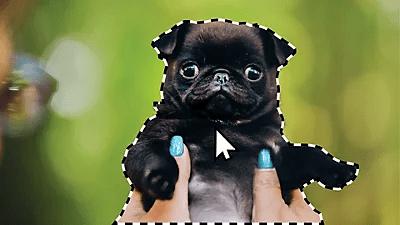 Adobe Photoshop motiv auswählen